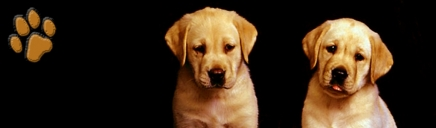 Dog Breeds Resource